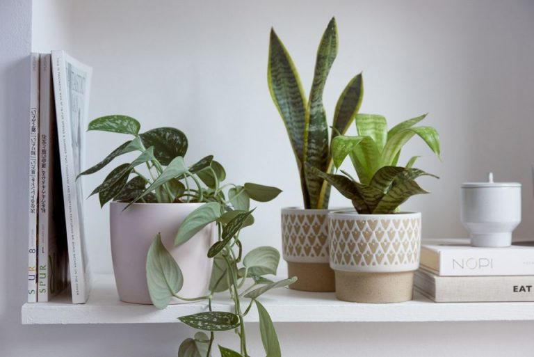 Plants in colorful pots as decoration on bookshelf